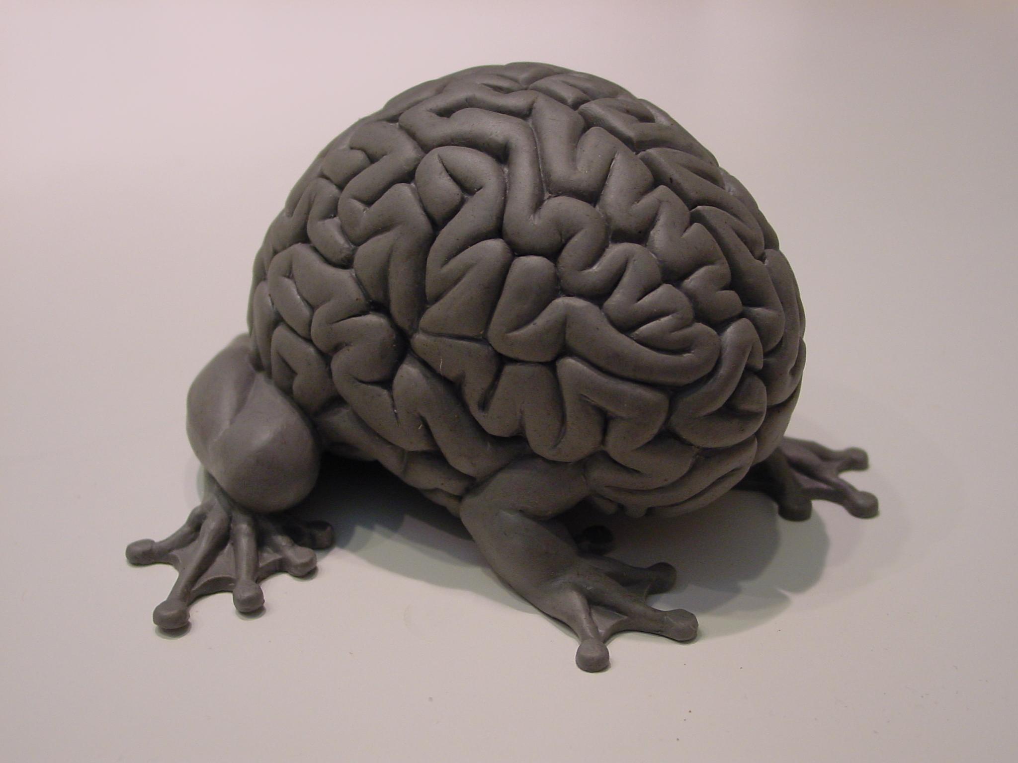 Днем рождения, смешные картинки мозга человека
