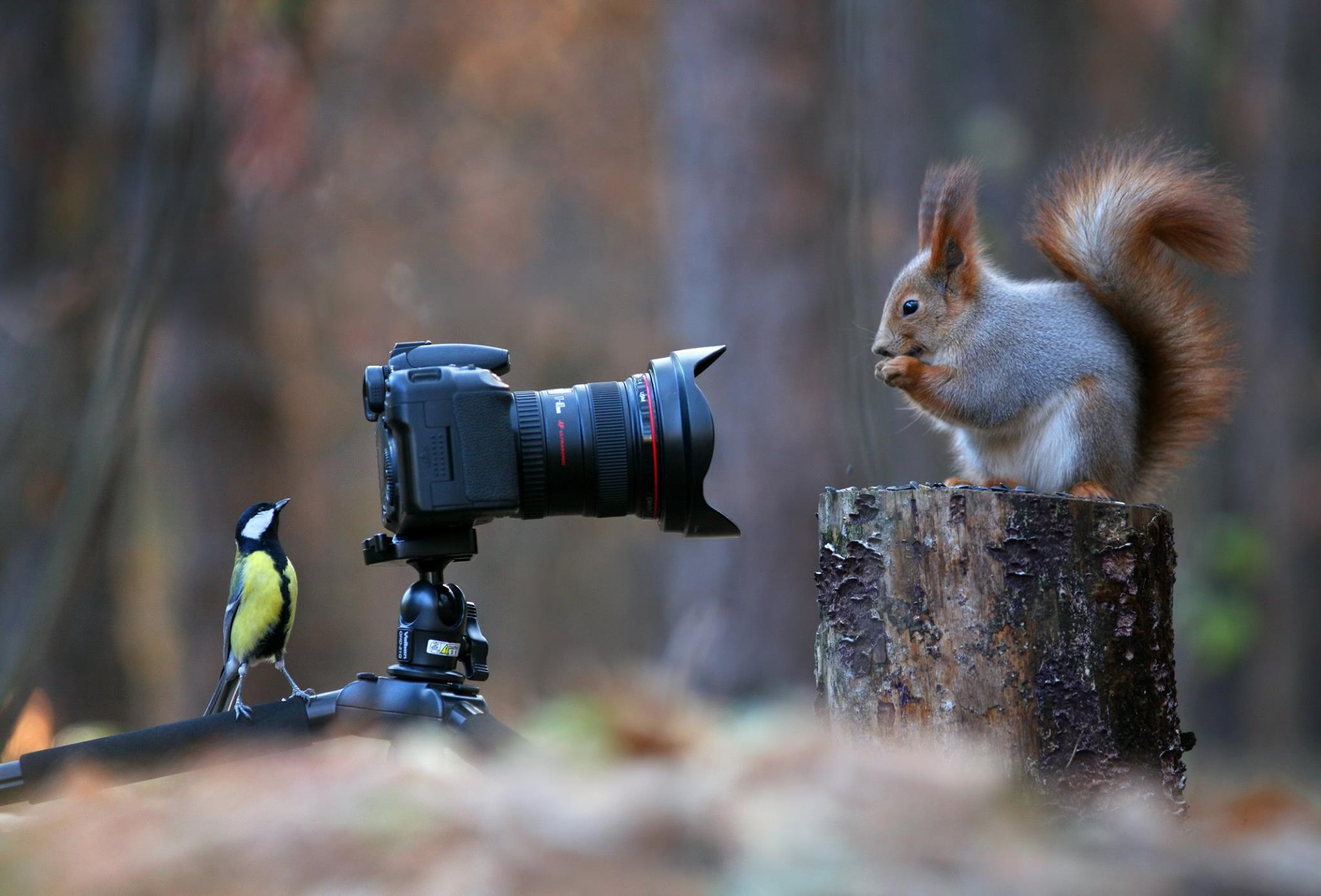 данные это взгляд на птиц глазами фотографа трудность