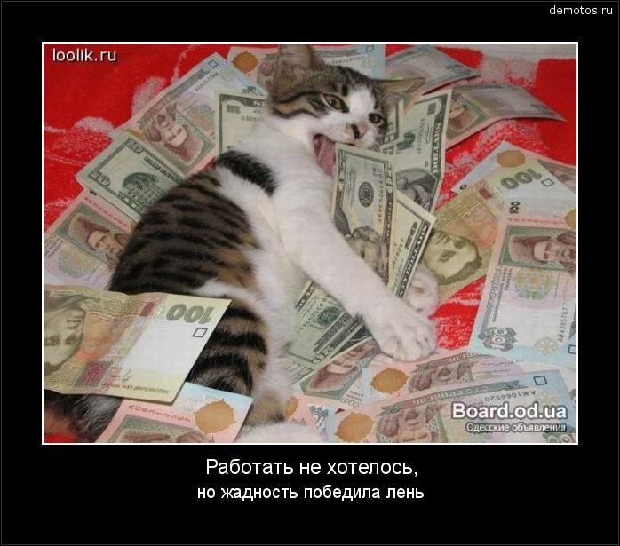 Демотиваторы кот и деньги