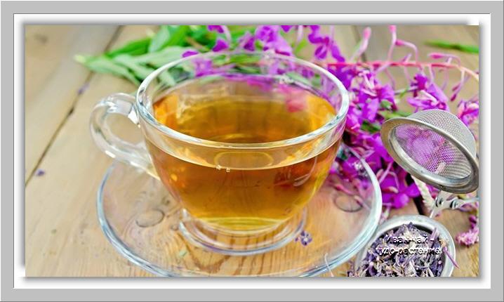 Иван чай как средство от алкоголизма