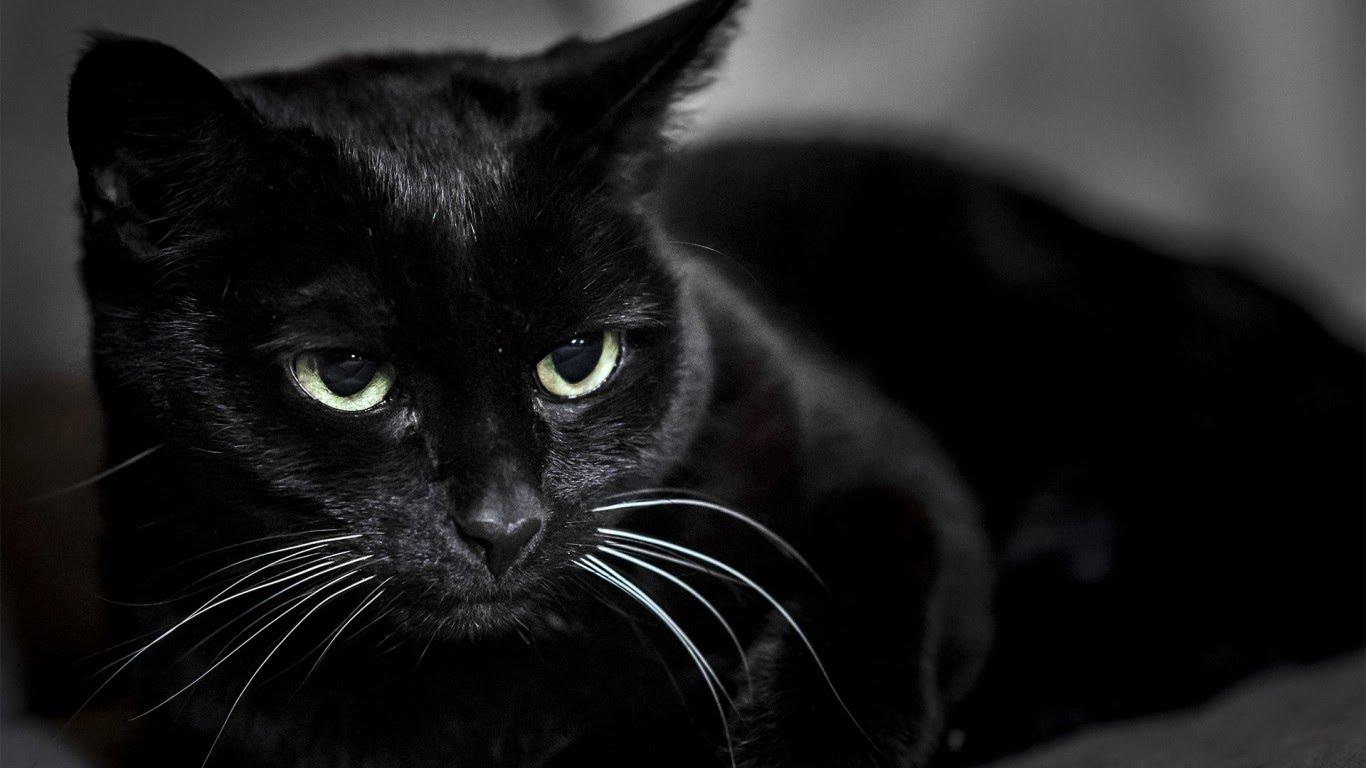 """Результат пошуку зображень за запитом """"котик обиделся"""""""