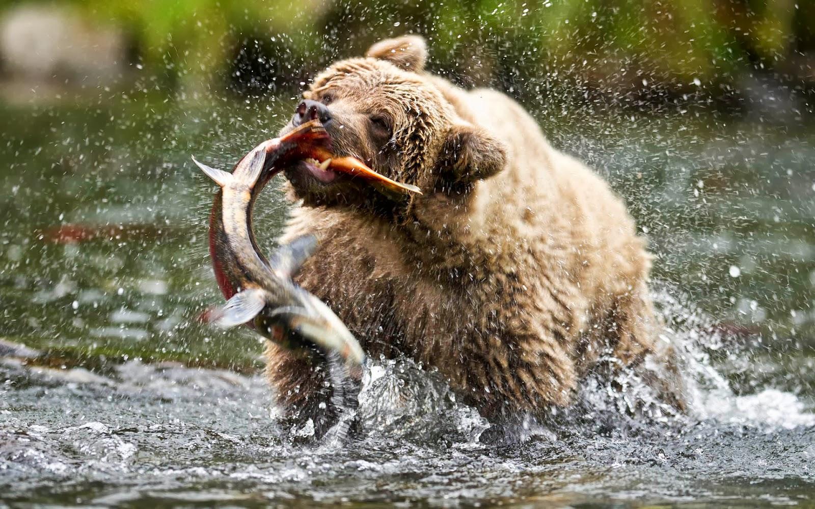 правда о fish hungry