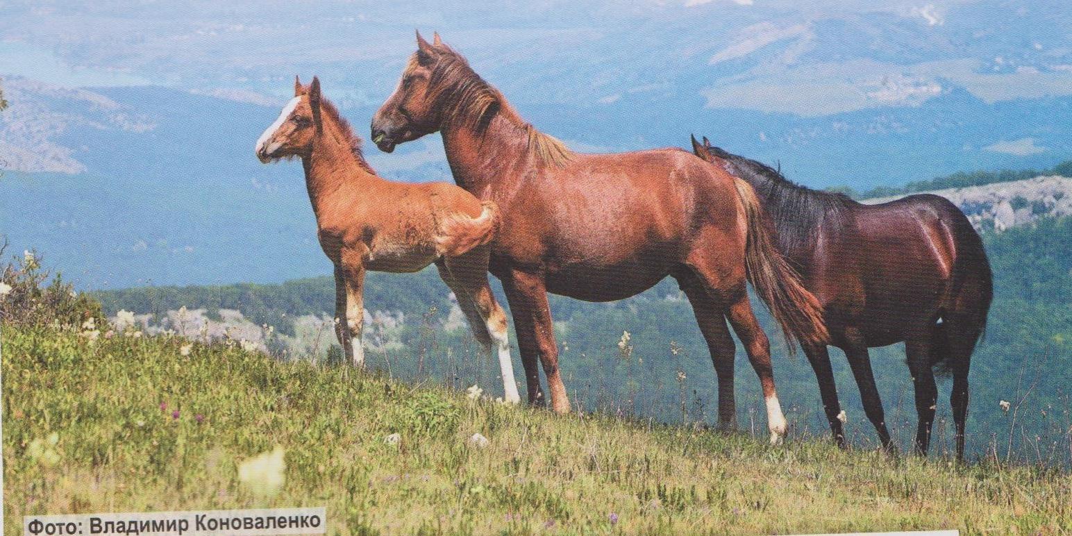 Картинки про лошадей на природе без людей