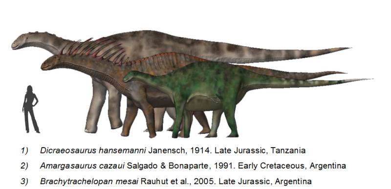 История, о которой не говорят Dicraeosaurids_BW