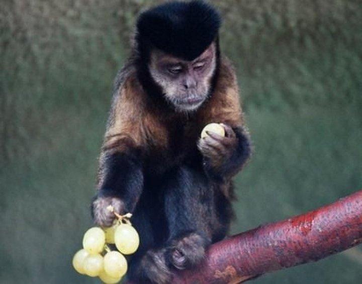 Секс обезьян blog