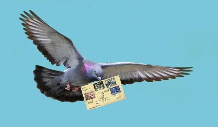 Национальный вопрос. Pigeon1
