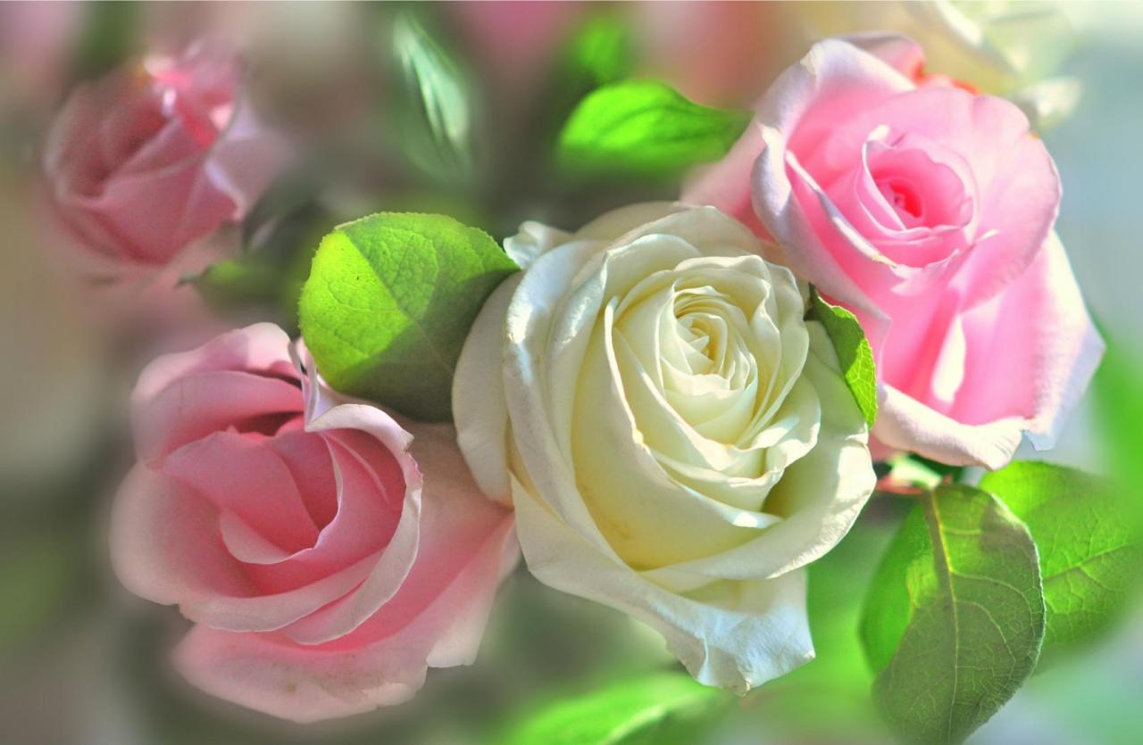 Цветы картинки фото с днем прекрасным