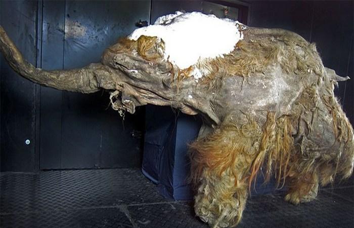 Картинки по запросу Рак простаты у 2250-летней египетской мумии.