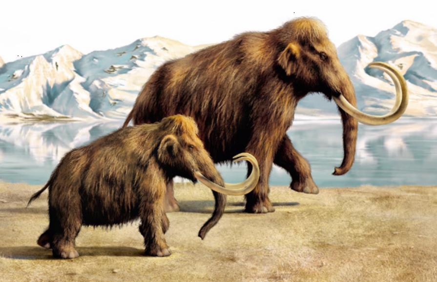 Картинки по запросу смайлик мамонт