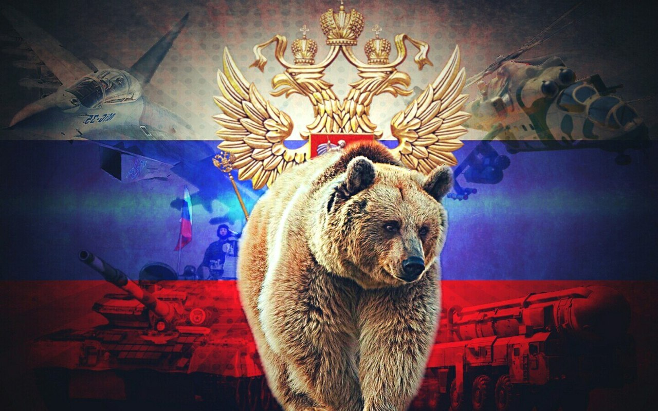 фото медведи горы