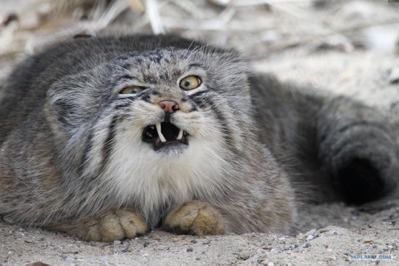 коты фото злые