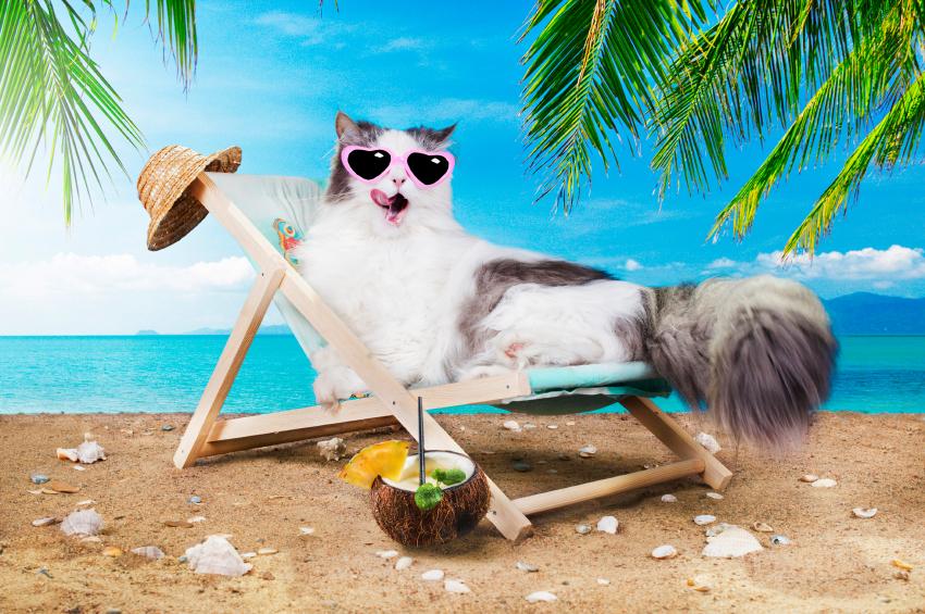 Смешные картинки отпуск море