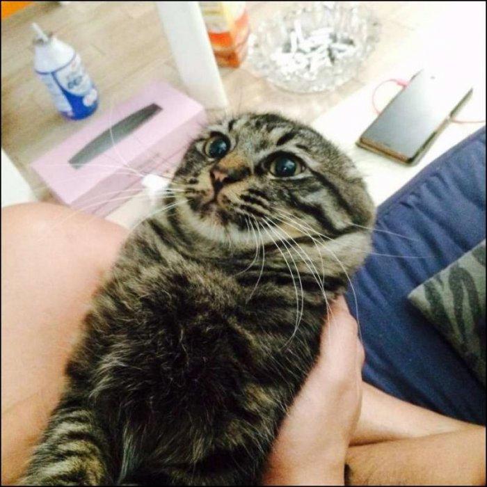 прикольные коты недавних дней фото эва полимер, позволяющий