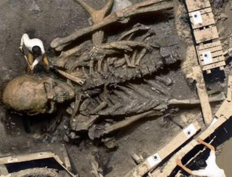 останки скелета 12 метров ограниченной ответственностью страховая