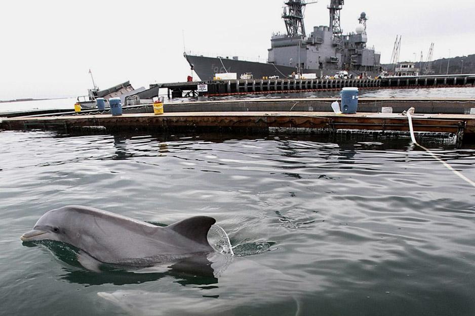 картинки боевых дельфинов сланец легковоспламеняющийся минерал