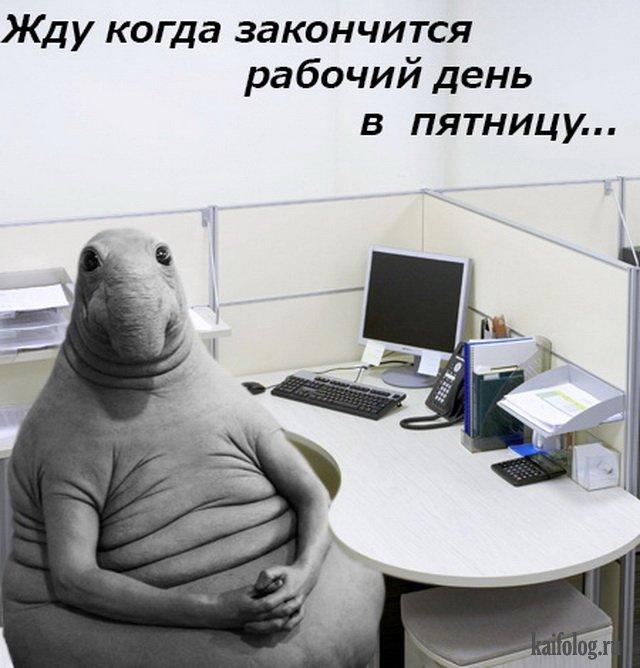 Поделки, смешные картинки офис пятница