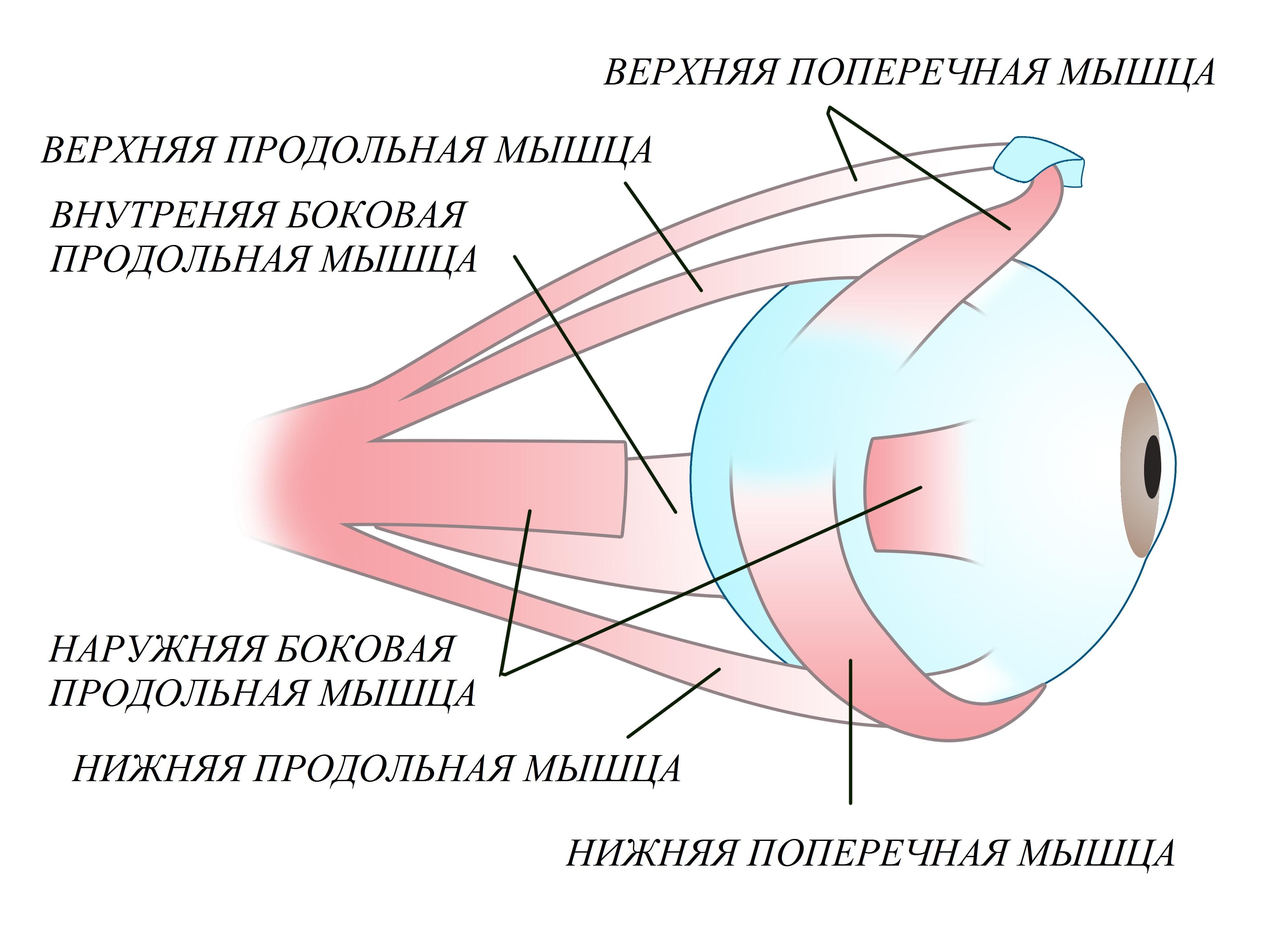 метод шичко для похудения