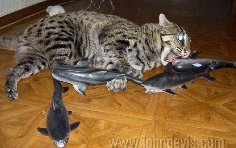 кот рыболов картинки