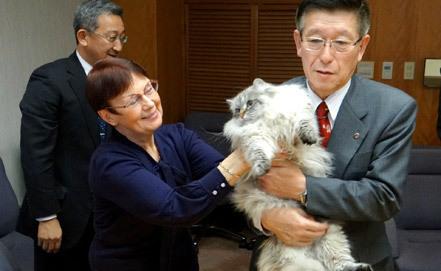 Кот от путина японцем