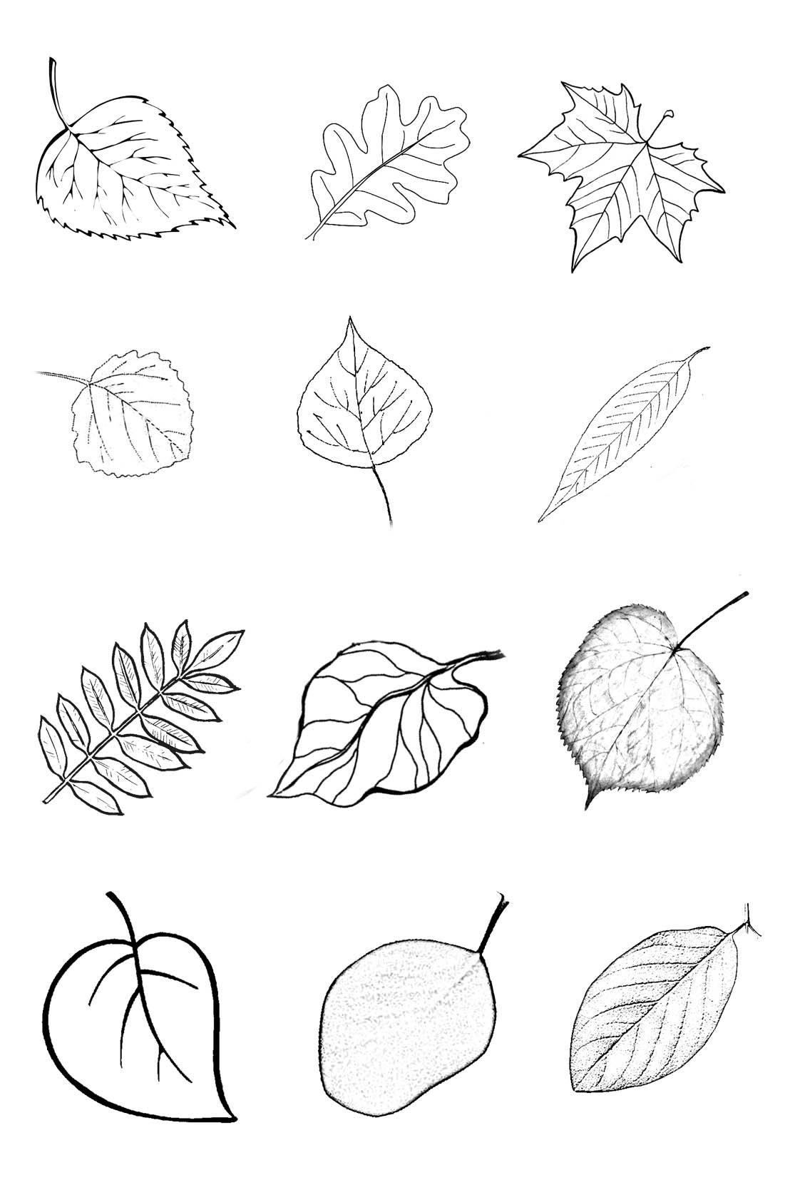 европа картинки для рисования листья деревьев так благополучной страны