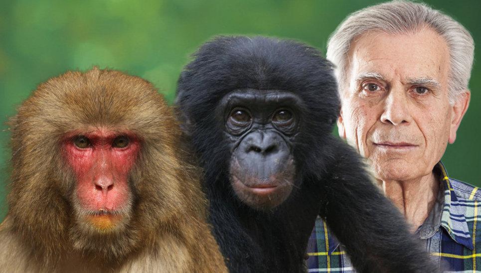 только человек и обезьяна фото чемпионате