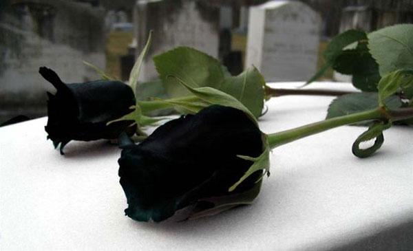 картинки красивые чёрные розы