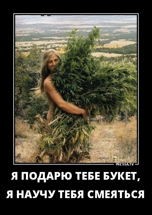 Теплица на миллион гривен: житель Черниговщины выращивал коноплю и галлюциногенные грибы - Цензор.НЕТ 2559