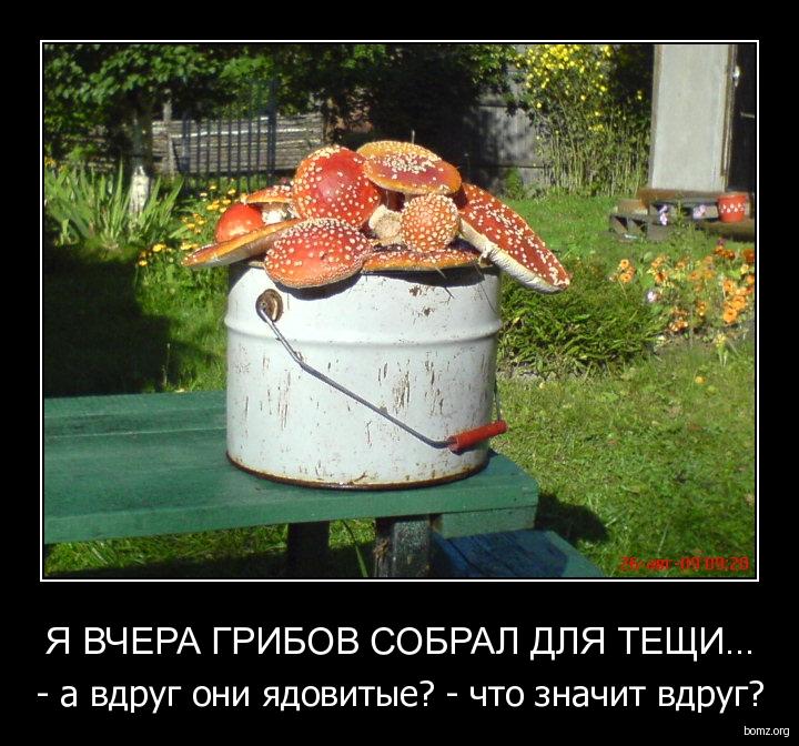 Прикольные картинки с надписями грибы