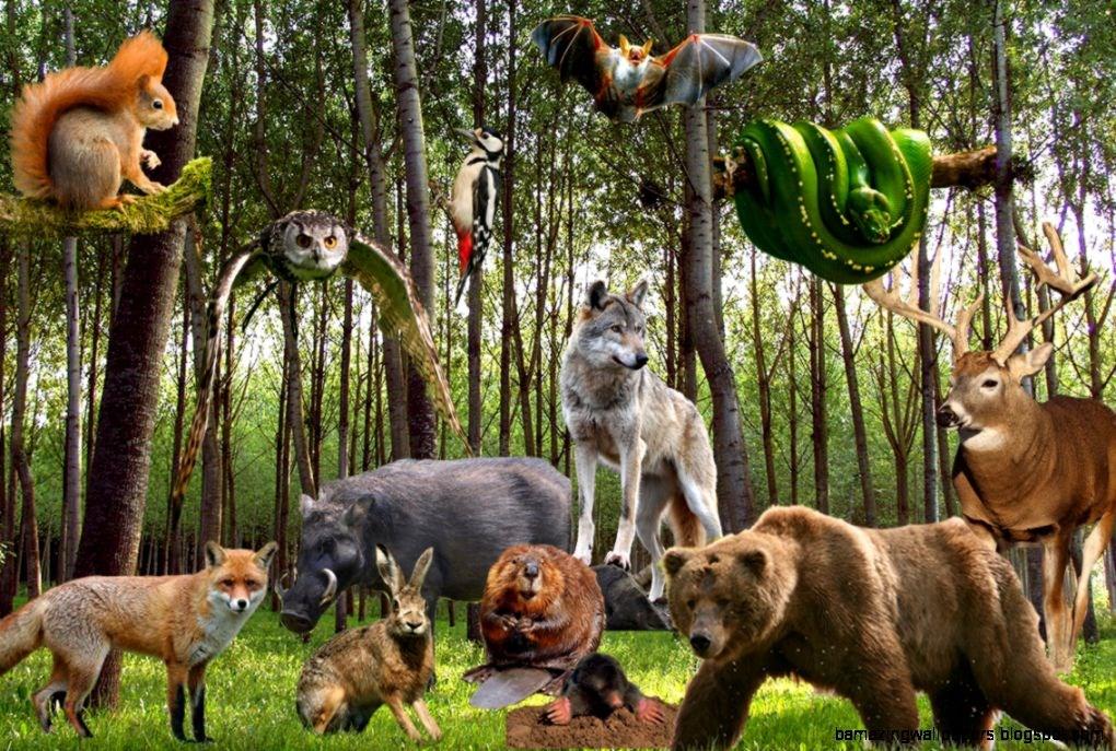 фотографии всех лесных животных осенняя погода мешает