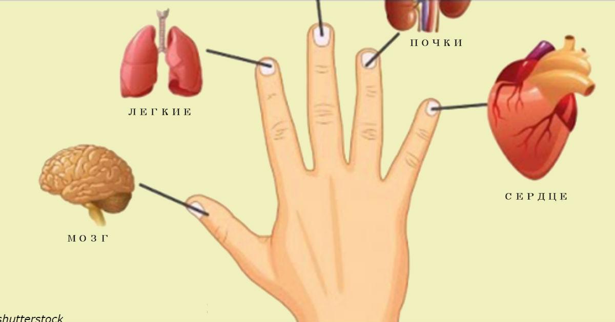 2fef5d99445b Каждый палец связан с 2 органами  Японский метод самоисцеления за 5 минут    Блог Алла Мироненко   КОНТ