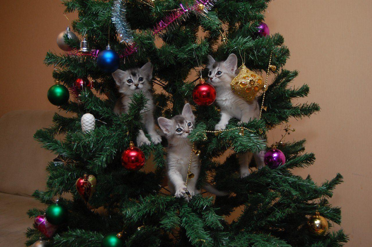 сочи является фото елки и котики вам