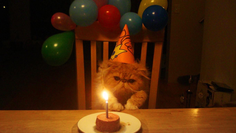 У меня сегодня день рождения картинки с котами, новорожденным