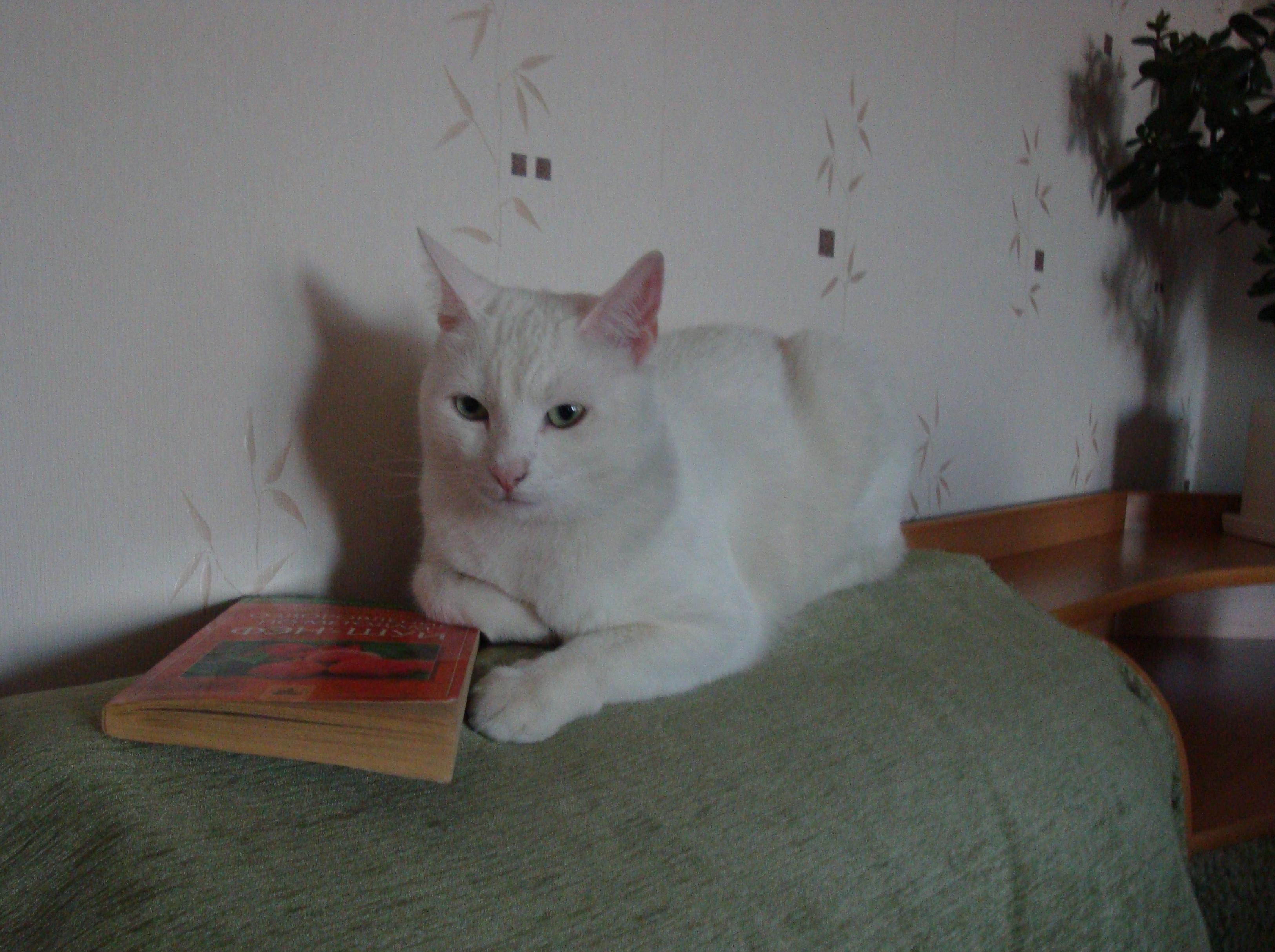 Один дома, не считая кота