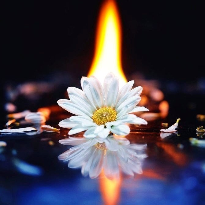 Огонь жизни