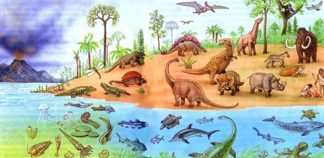 evolution of animals - 1120×547