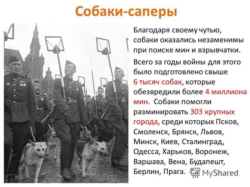 Друзья людей (И тогда Иосиф Сталин принял решение: — Пусть эту собаку пронесут на руках по Красной площади на моём кителе.)