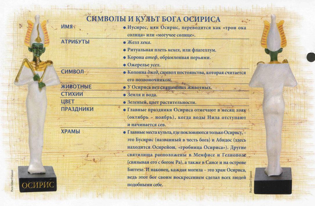Как выглядит гриб свинушка фото и описание