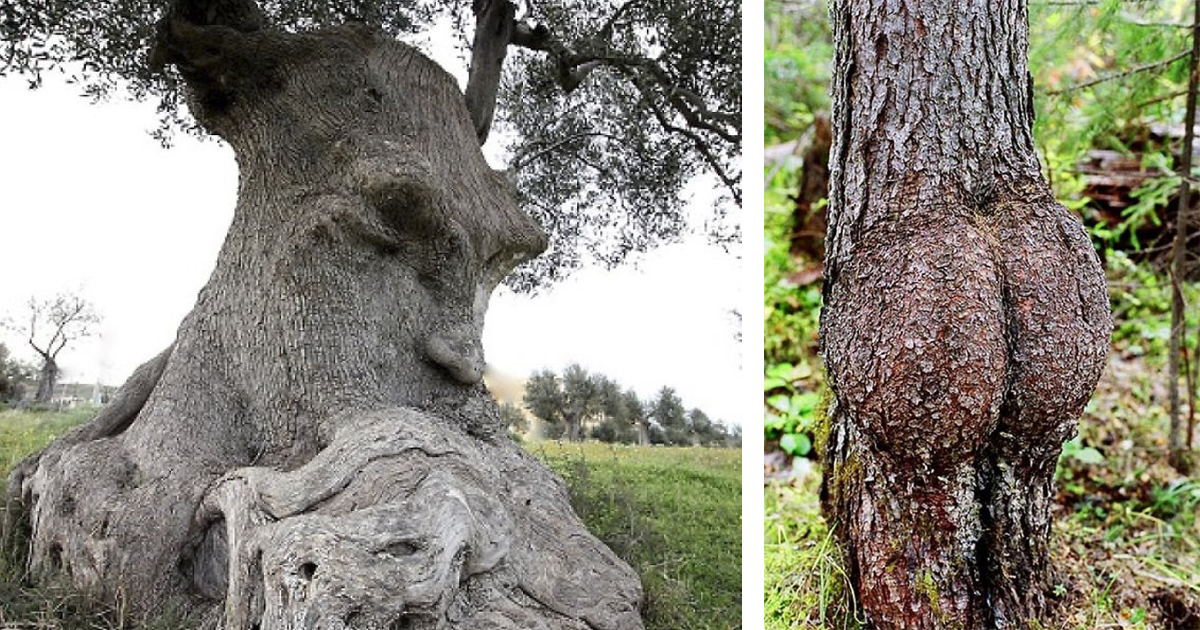 https://cont.ws/uploads/pic/2018/7/pareidolia-trees-featured-1.jpg