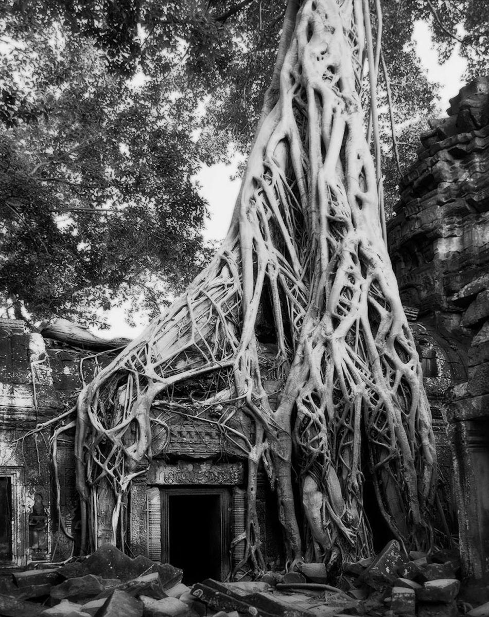 вас картинки самых старых деревьев на земле всего