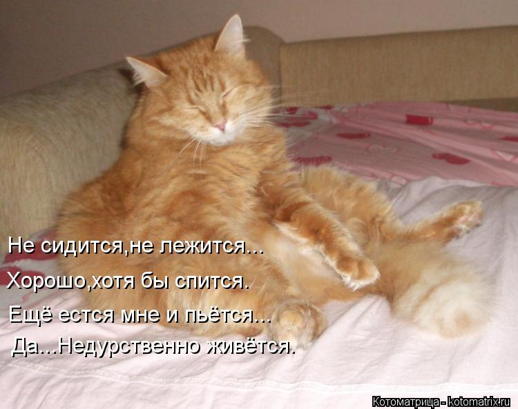Картинки по запросу кто не спит