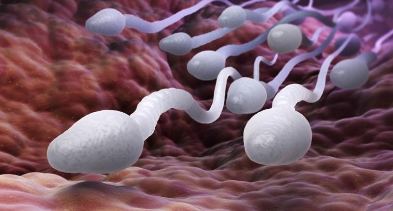 Сперма в пасе
