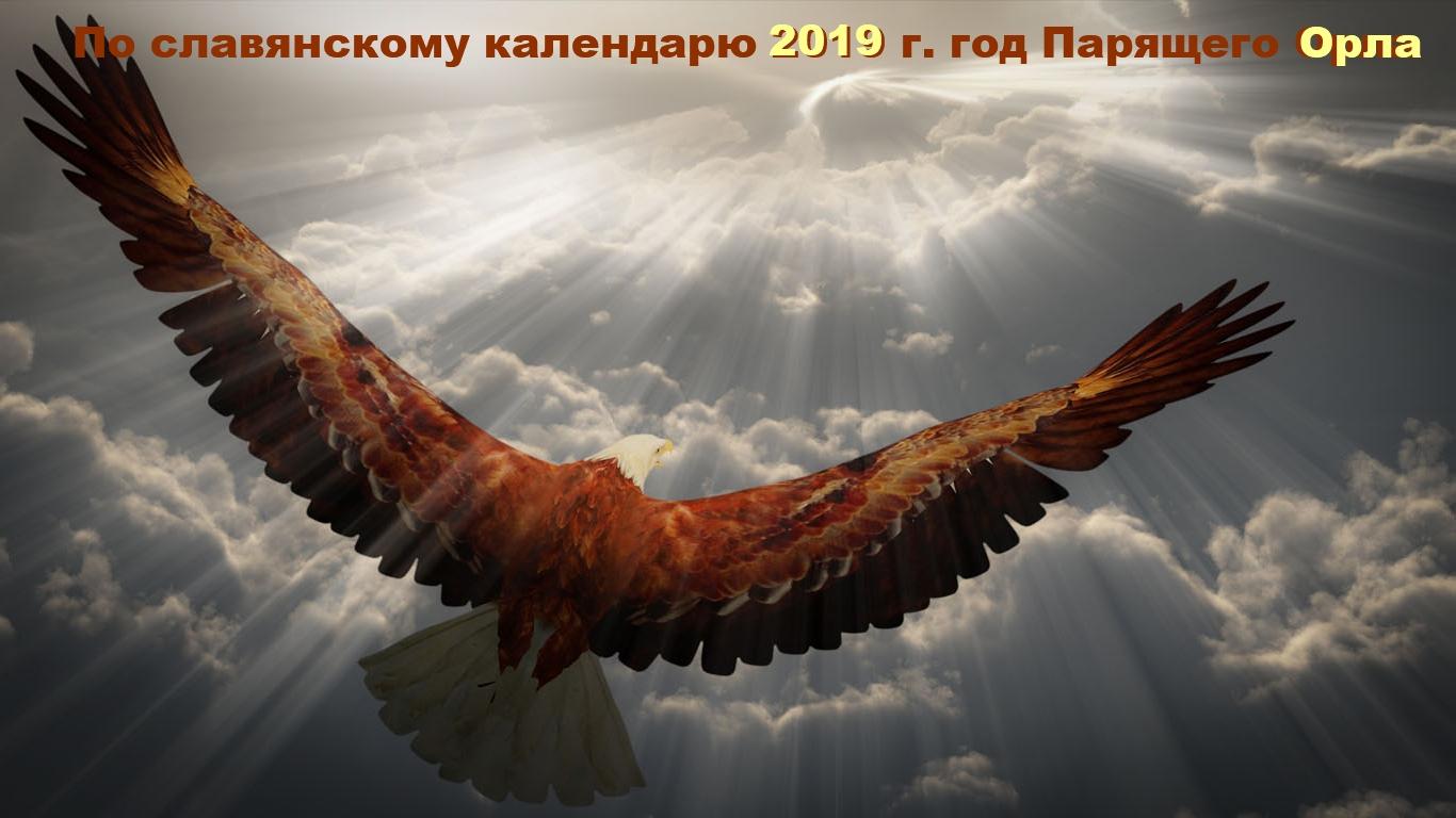 Картинки по запросу картинки парящего орла в небе