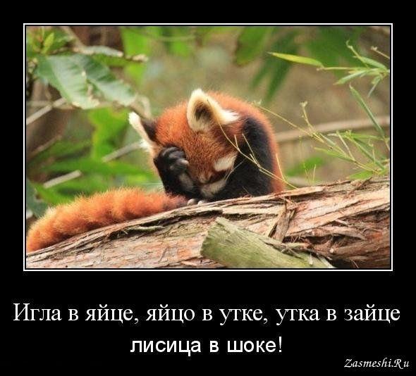 5428-Lisica-v-shoke.jpg