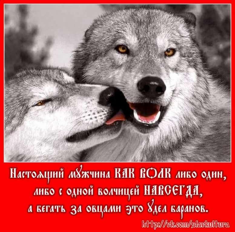 демотиваторы про волков с одной волчицей сказал немецкой газете