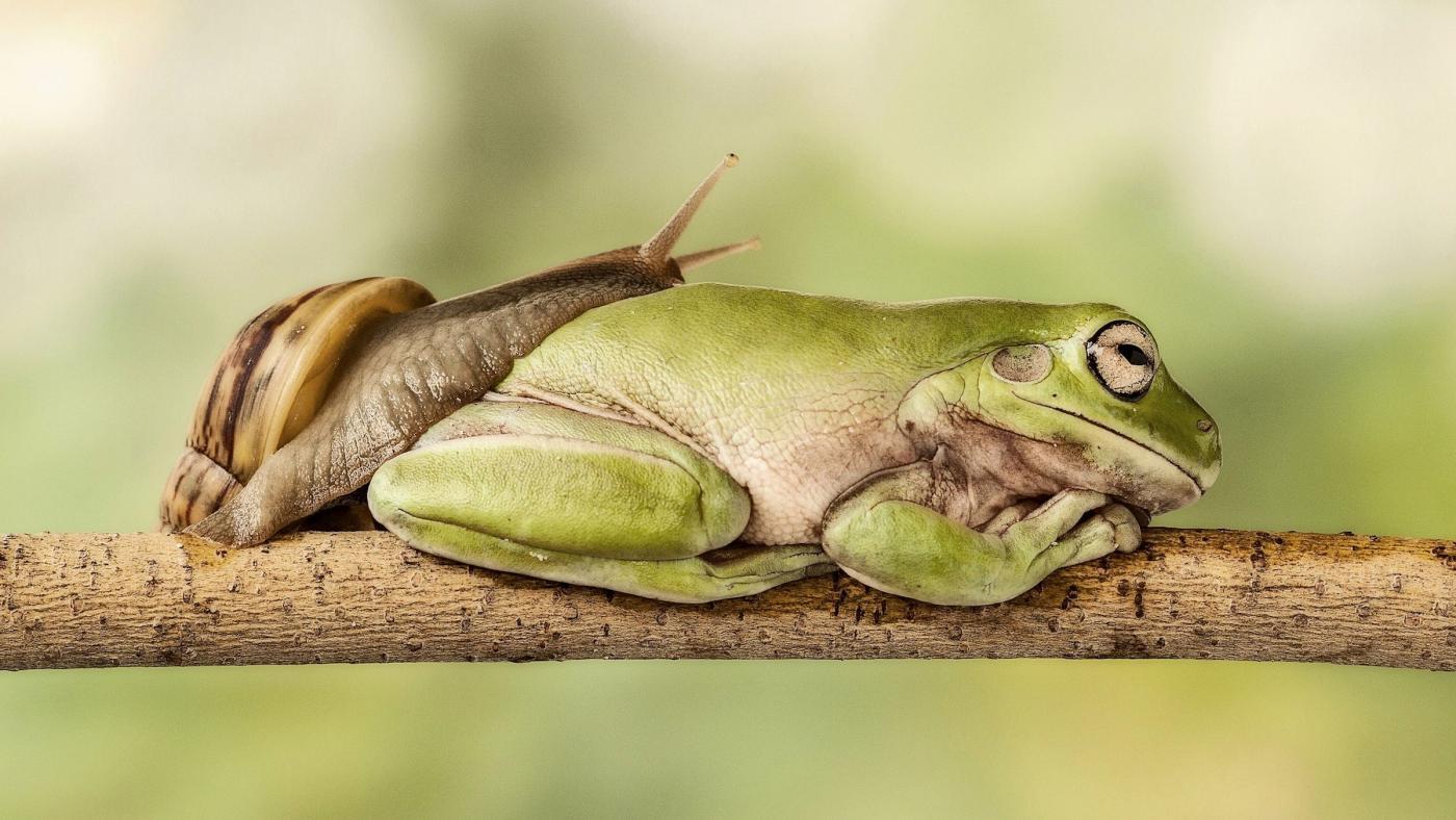 Смешное фото спящей жабы много