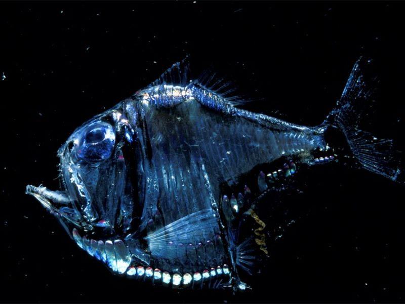 рамка картинки рыба свет указом