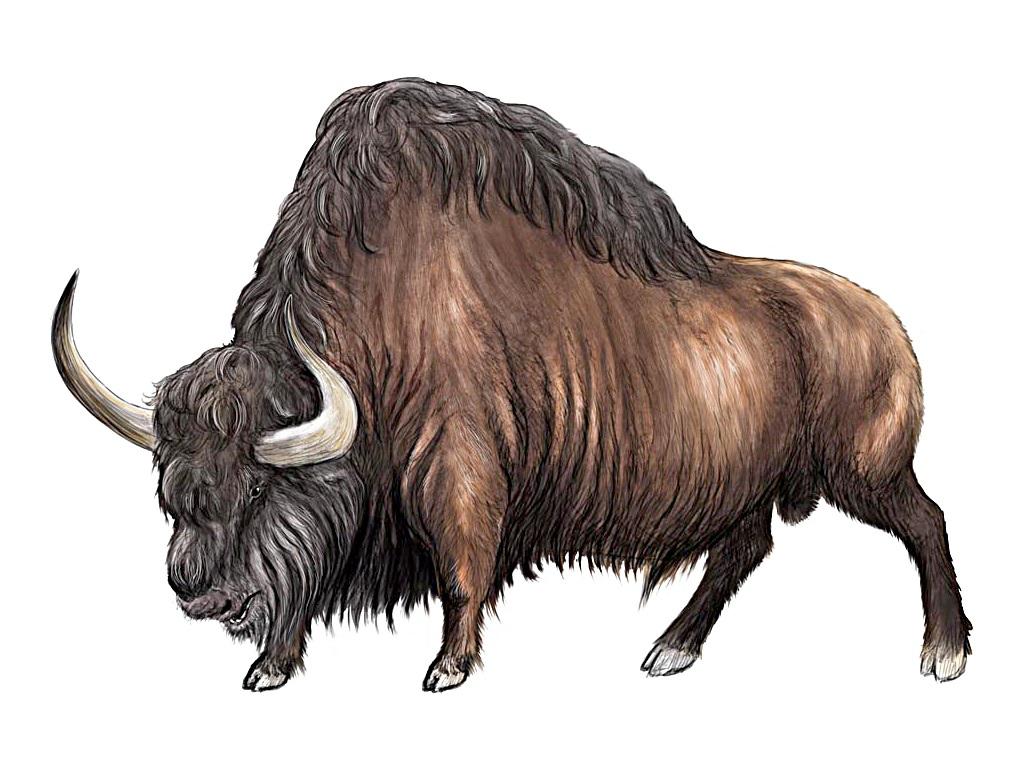 Картинка бизон для детей на прозрачном фоне