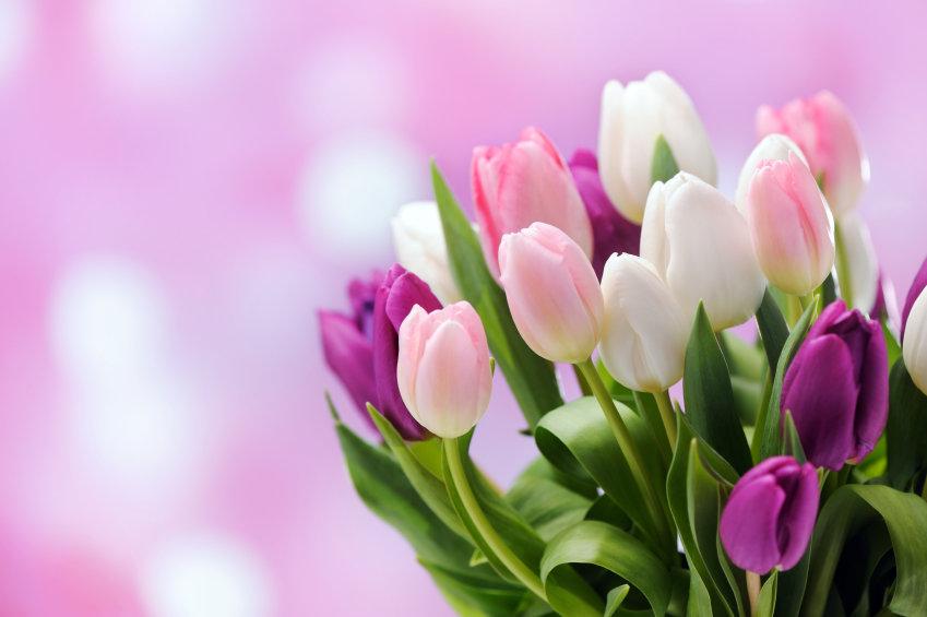 Картинки на восьмое марта с тюльпанами