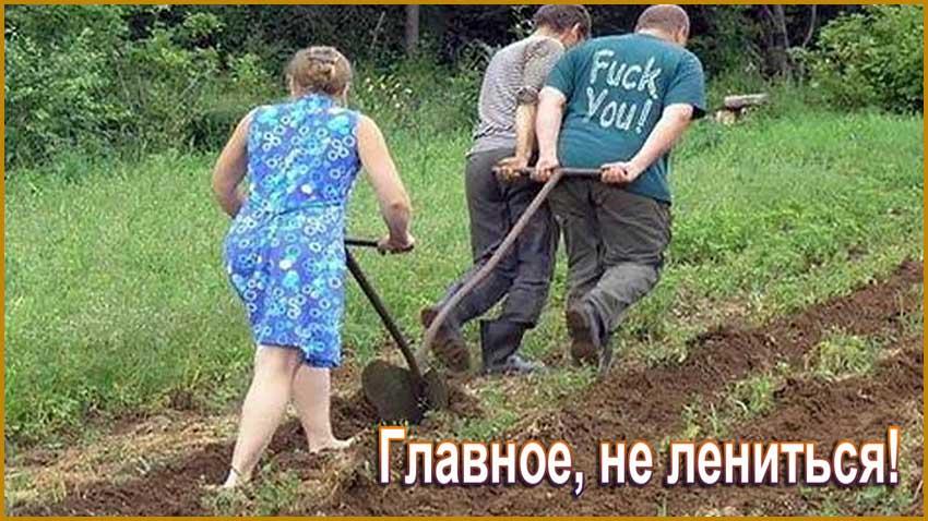 Копать огород картинки смешные