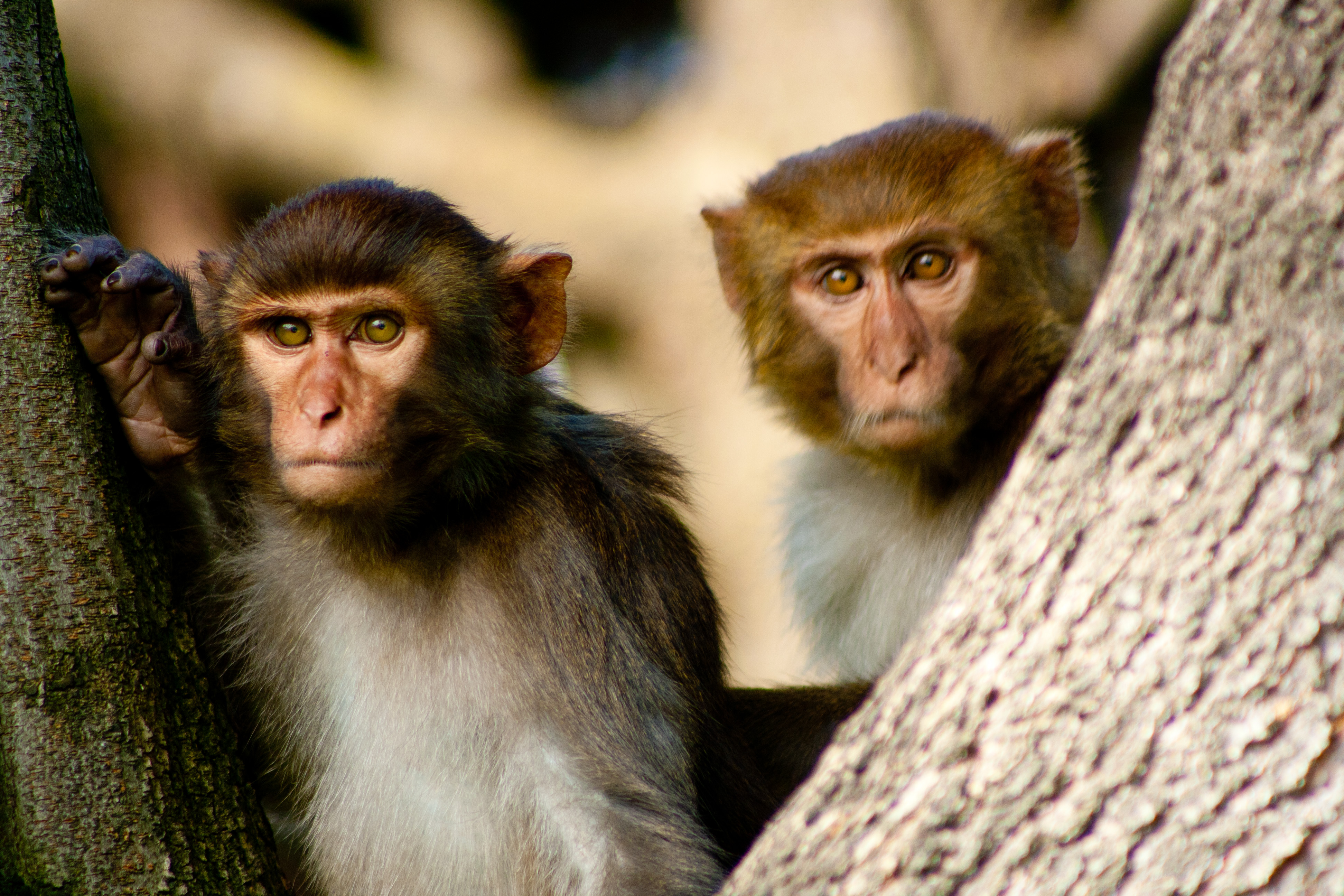 Открытки, обезьяны фото красивые и смешные